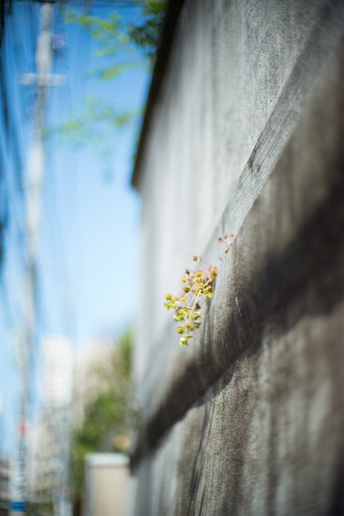 flower and wall