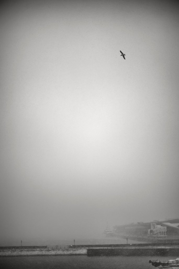 seagull and snow